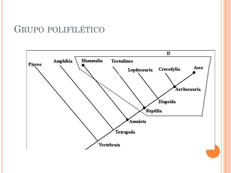 G RUPO POLIFILÉTICO