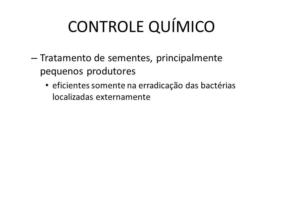 CONTROLE QUÍMICO – Tratamento de sementes, principalmente pequenos produtores eficientes somente na erradicação das bactérias localizadas externamente