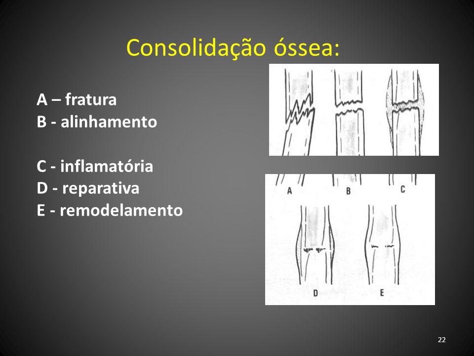Consolidação óssea: A – fratura B - alinhamento C - inflamatória D - reparativa E - remodelamento 22