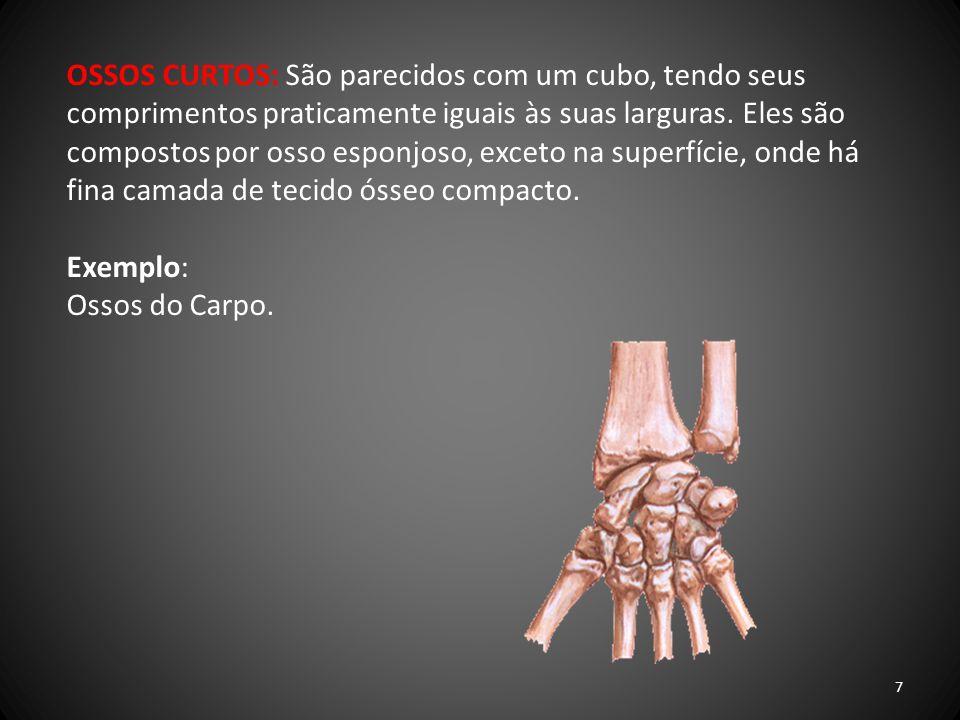 OSSOS LAMINARES (PLANOS): São ossos finos e compostos por duas lâminas paralelas de tecido ósseo compacto, com camada de osso esponjoso entre elas.