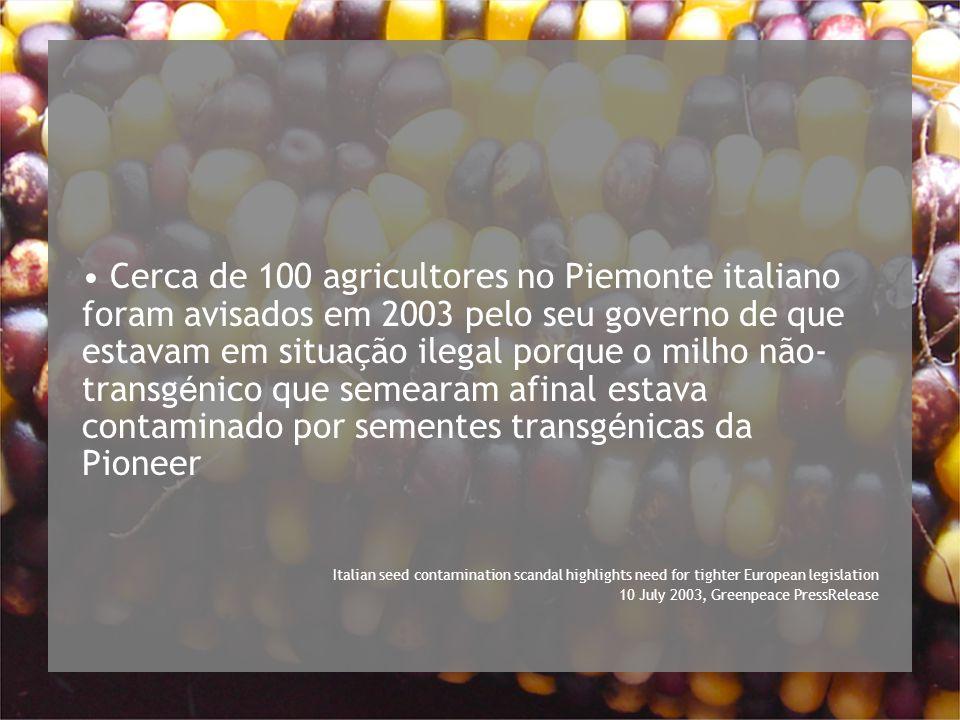 Cerca de 100 agricultores no Piemonte italiano foram avisados em 2003 pelo seu governo de que estavam em situação ilegal porque o milho não- transg é nico que semearam afinal estava contaminado por sementes transg é nicas da Pioneer Italian seed contamination scandal highlights need for tighter European legislation 10 July 2003, Greenpeace PressRelease