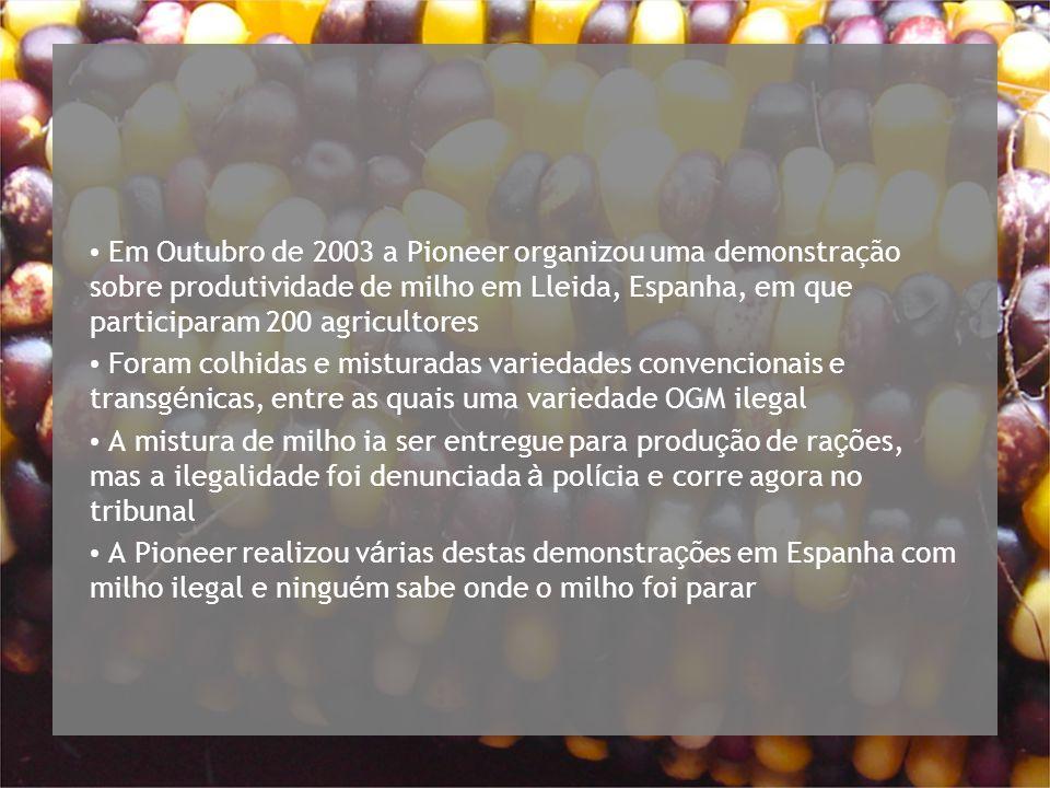 Em Outubro de 2003 a Pioneer organizou uma demonstração sobre produtividade de milho em Lleida, Espanha, em que participaram 200 agricultores Foram colhidas e misturadas variedades convencionais e transg é nicas, entre as quais uma variedade OGM ilegal A mistura de milho ia ser entregue para produ ç ão de ra ç ões, mas a ilegalidade foi denunciada à pol í cia e corre agora no tribunal A Pioneer realizou v á rias destas demonstra ç ões em Espanha com milho ilegal e ningu é m sabe onde o milho foi parar