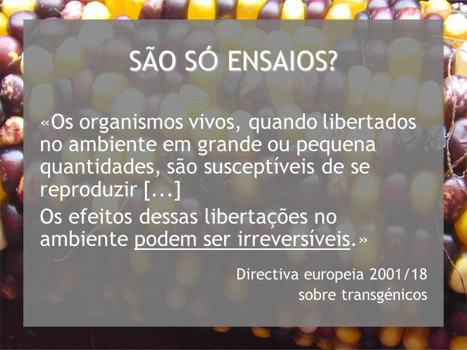 SÃO S Ó ENSAIOS.
