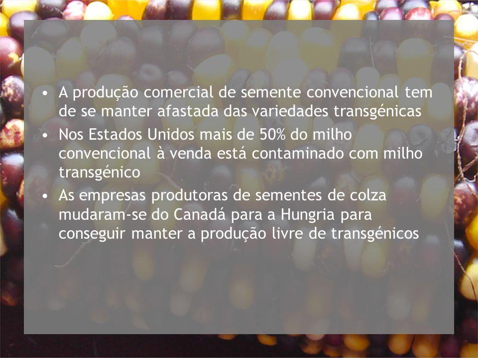 A produção comercial de semente convencional tem de se manter afastada das variedades transgénicas Nos Estados Unidos mais de 50% do milho convencional à venda está contaminado com milho transgénico As empresas produtoras de sementes de colza mudaram-se do Canadá para a Hungria para conseguir manter a produção livre de transgénicos