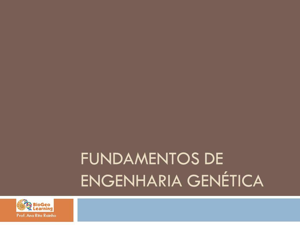 FUNDAMENTOS DE ENGENHARIA GENÉTICA Prof. Ana Rita Rainho