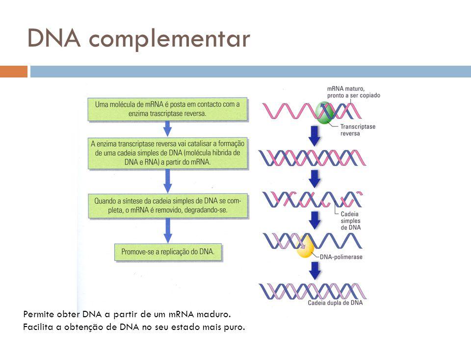 DNA complementar Permite obter DNA a partir de um mRNA maduro. Facilita a obtenção de DNA no seu estado mais puro.