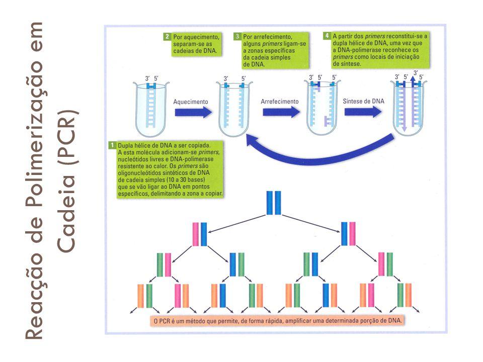 Reacção de Polimerização em Cadeia (PCR)