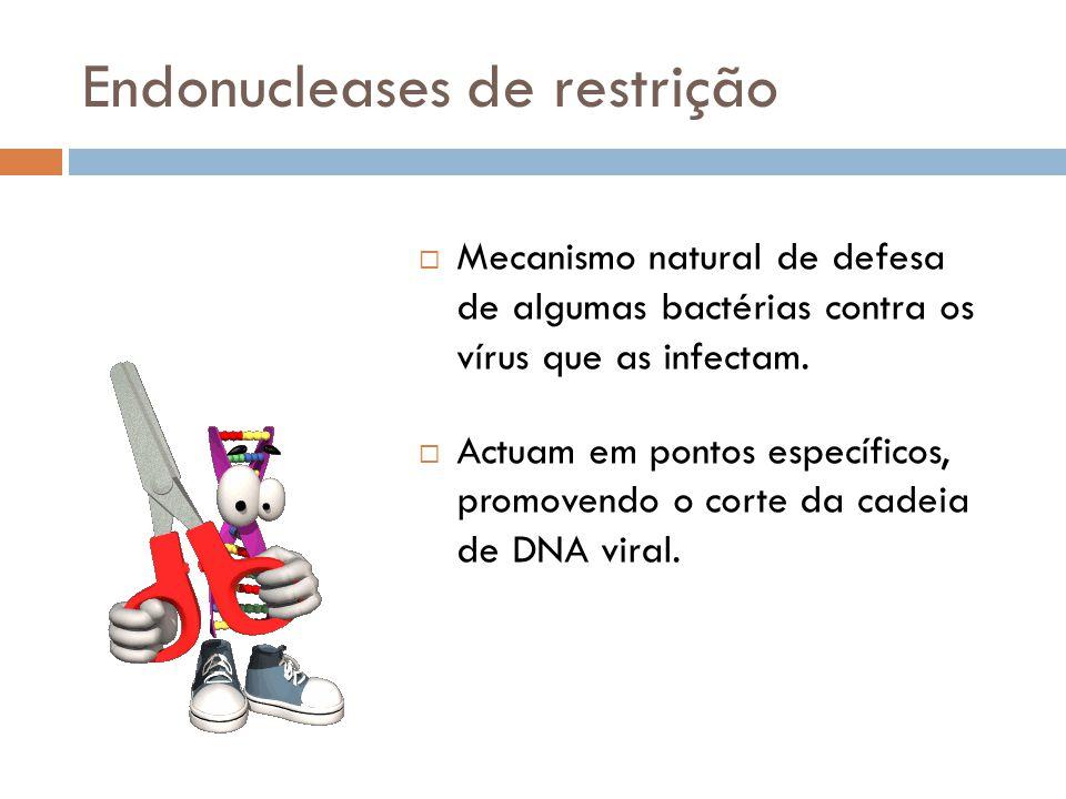 Endonucleases de restrição  Mecanismo natural de defesa de algumas bactérias contra os vírus que as infectam.  Actuam em pontos específicos, promove
