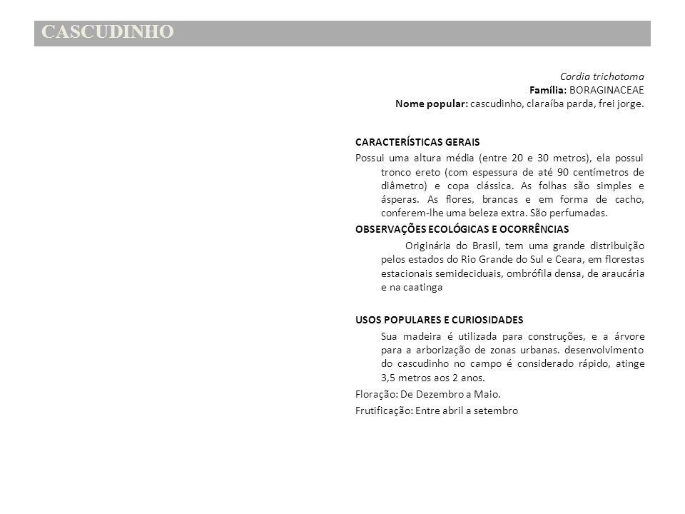 CASCUDINHO Cordia trichotoma Família: BORAGINACEAE Nome popular: cascudinho, claraíba parda, frei jorge. CARACTERÍSTICAS GERAIS Possui uma altura médi