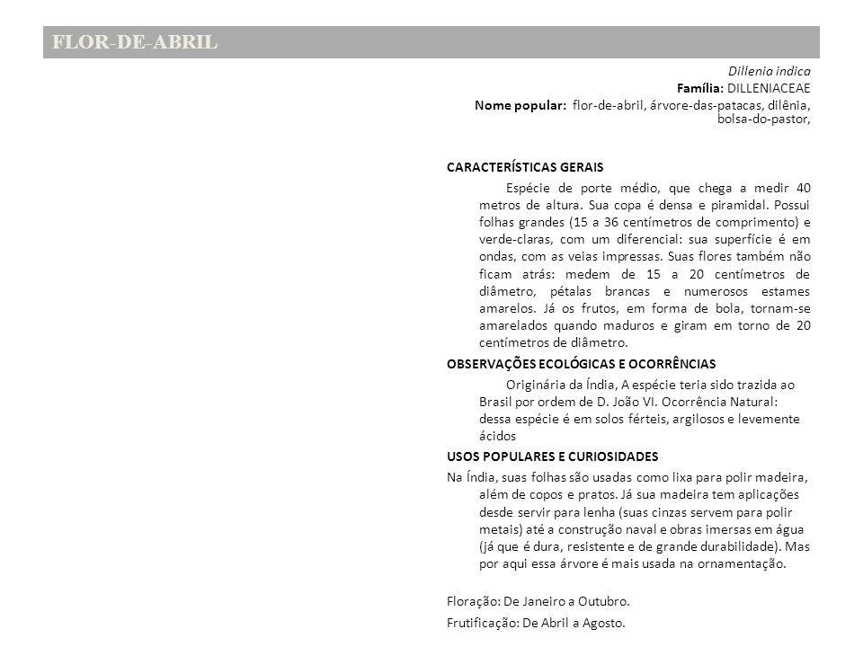 FLOR-DE-ABRIL Dillenia indica Família: DILLENIACEAE Nome popular: flor-de-abril, árvore-das-patacas, dilênia, bolsa-do-pastor, CARACTERÍSTICAS GERAIS