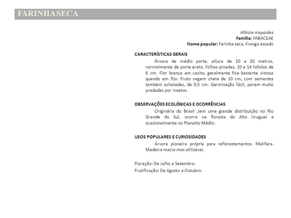 Albizia niopoides Família: FABACEAE Nome popular: Farinha seca, Frango assado CARACTERÍSTICAS GERAIS Árvore de médio porte, altura de 10 a 20 metros,