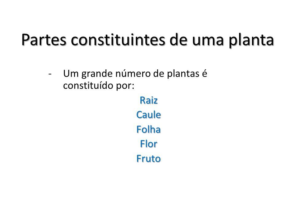 Partes constituintes de uma planta -Um grande número de plantas é constituído por:RaizCauleFolhaFlorFruto