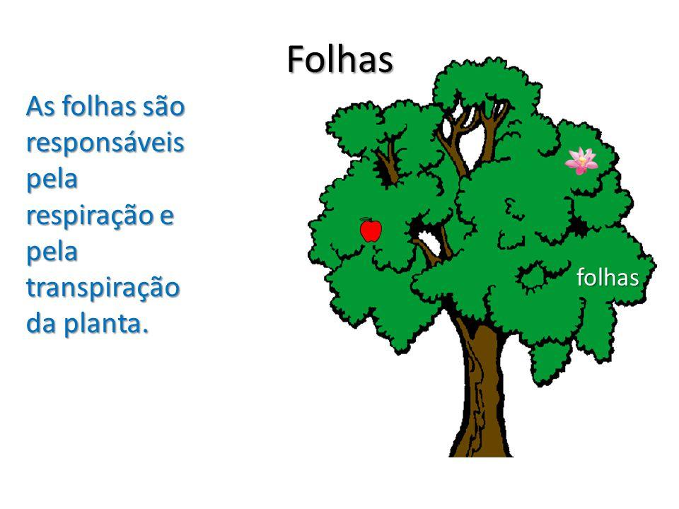 Folhas As folhas são responsáveis pela respiração e pela transpiração da planta. folhas