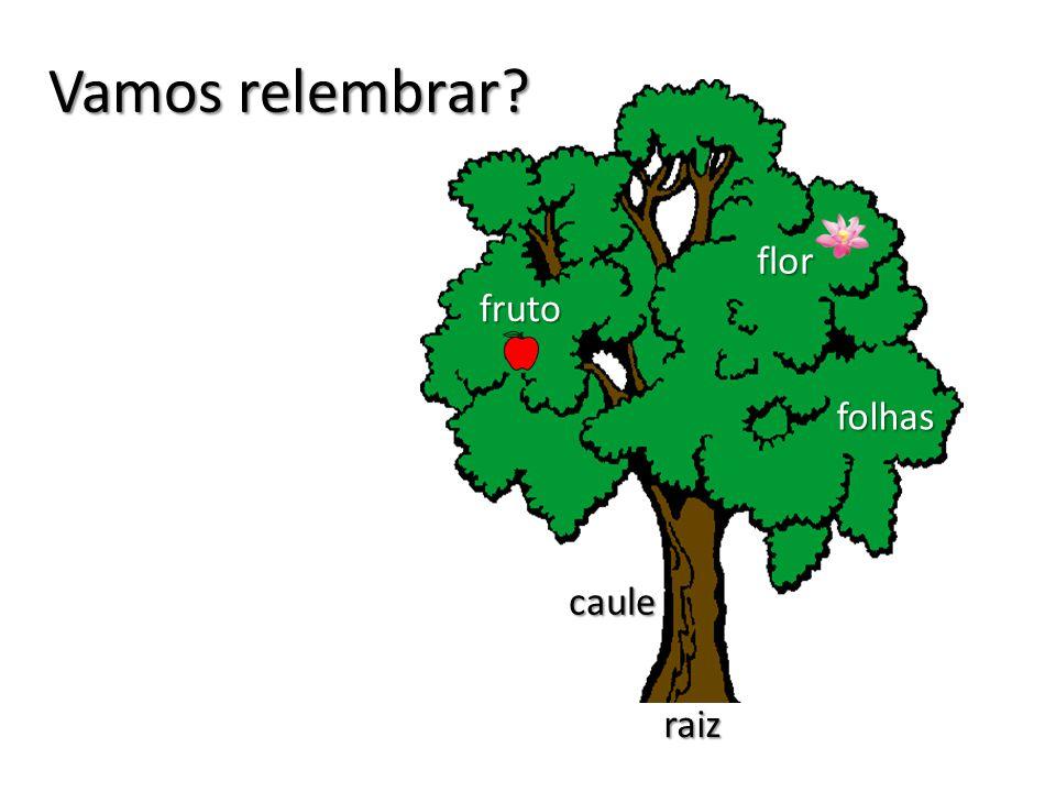 Vamos relembrar? raiz caule fruto flor folhas