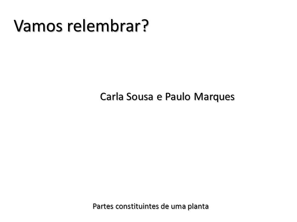 Carla Sousa e Paulo Marques Partes constituintes de uma planta