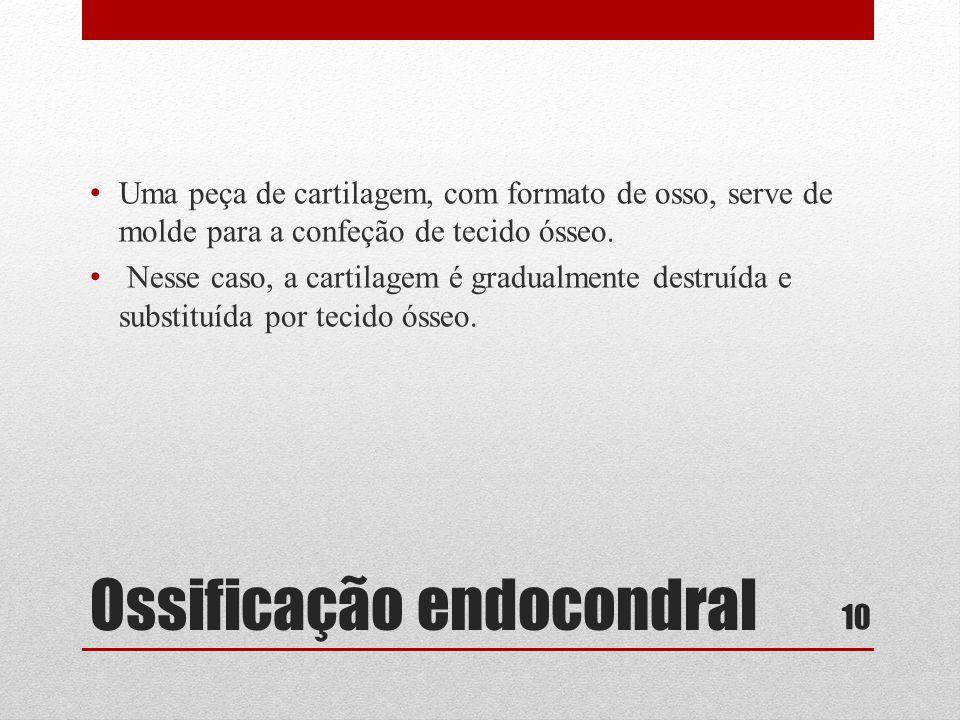 Ossificação endocondral • Uma peça de cartilagem, com formato de osso, serve de molde para a confeção de tecido ósseo.