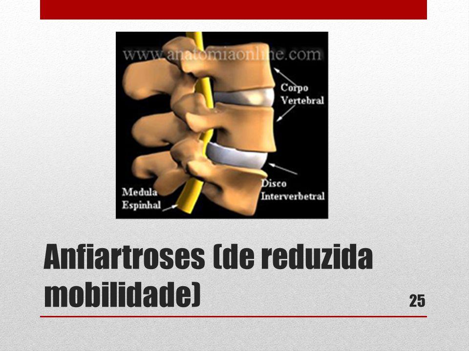 Anfiartroses (de reduzida mobilidade) 25