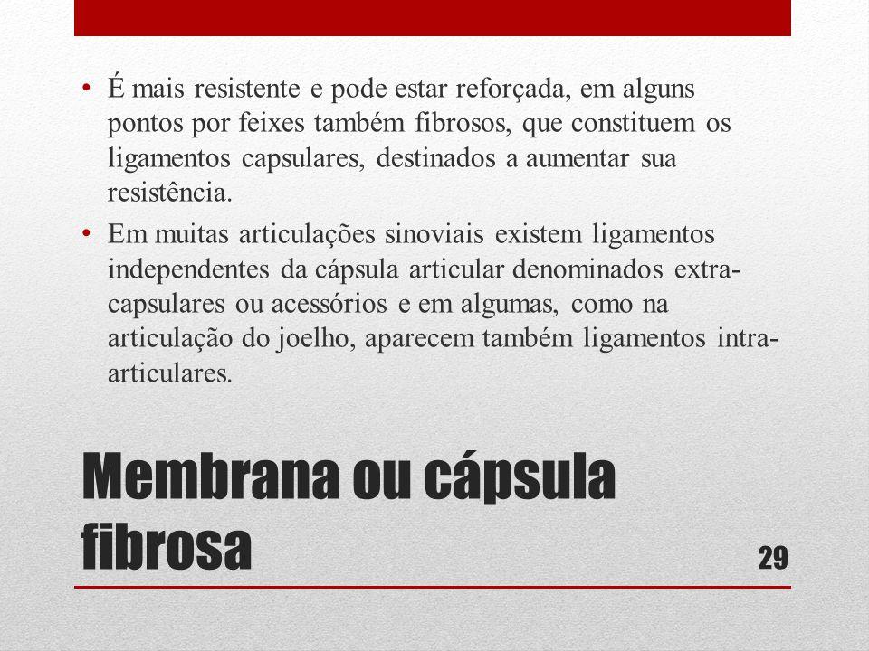 Membrana ou cápsula fibrosa • É mais resistente e pode estar reforçada, em alguns pontos por feixes também fibrosos, que constituem os ligamentos capsulares, destinados a aumentar sua resistência.