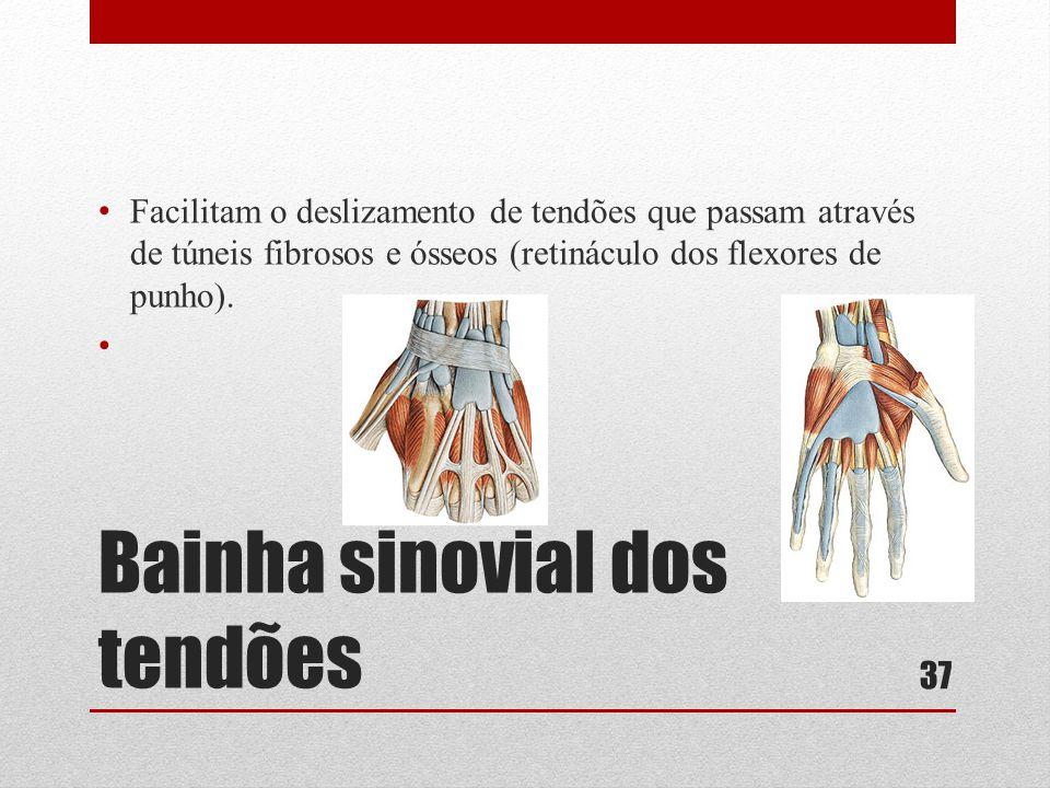 Bainha sinovial dos tendões • Facilitam o deslizamento de tendões que passam através de túneis fibrosos e ósseos (retináculo dos flexores de punho).