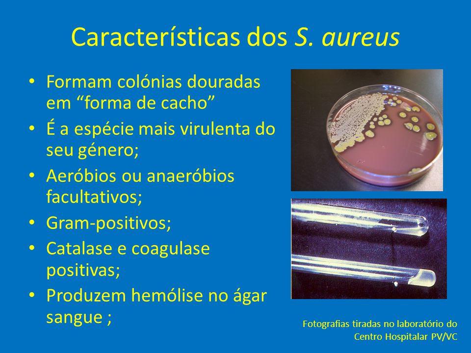 """Características dos S. aureus • Formam colónias douradas em """"forma de cacho"""" • É a espécie mais virulenta do seu género; • Aeróbios ou anaeróbios facu"""