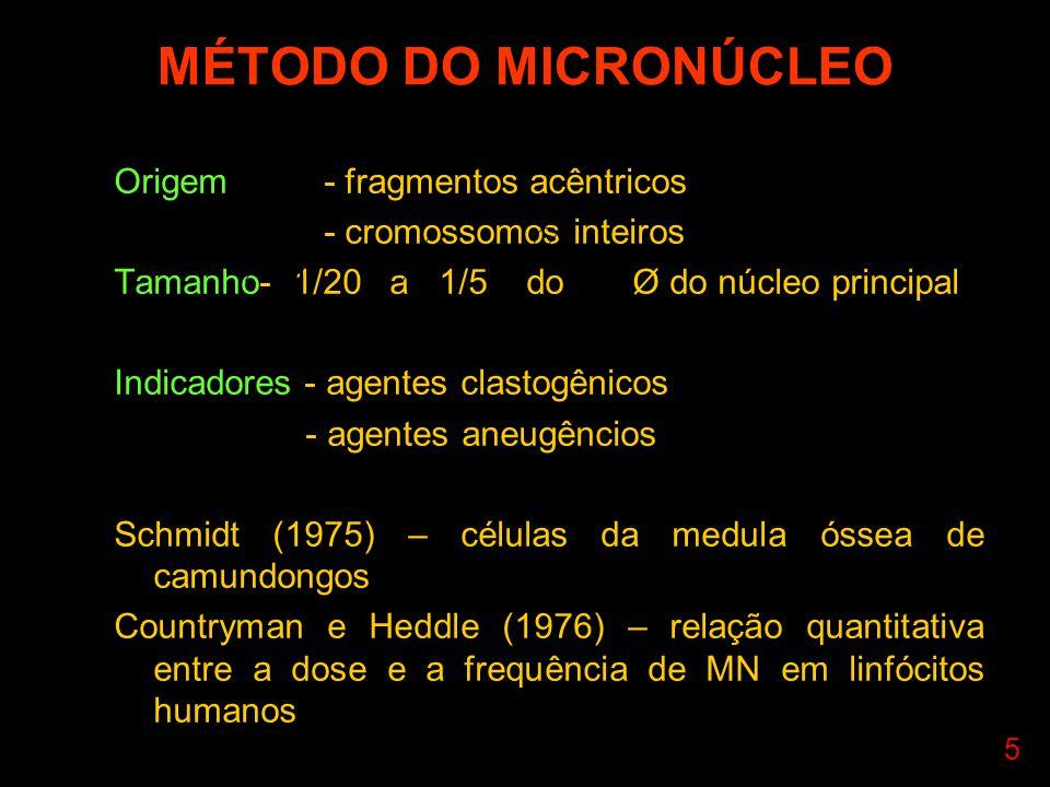 5 MÉTODO DO MICRONÚCLEO Origem- fragmentos acêntricos - cromossomos inteiros Tamanho- 1/20 a 1/5 do Ø do núcleo principal Indicadores - agentes clastogênicos - agentes aneugêncios Schmidt (1975) – células da medula óssea de camundongos Countryman e Heddle (1976) – relação quantitativa entre a dose e a frequência de MN em linfócitos humanos 205