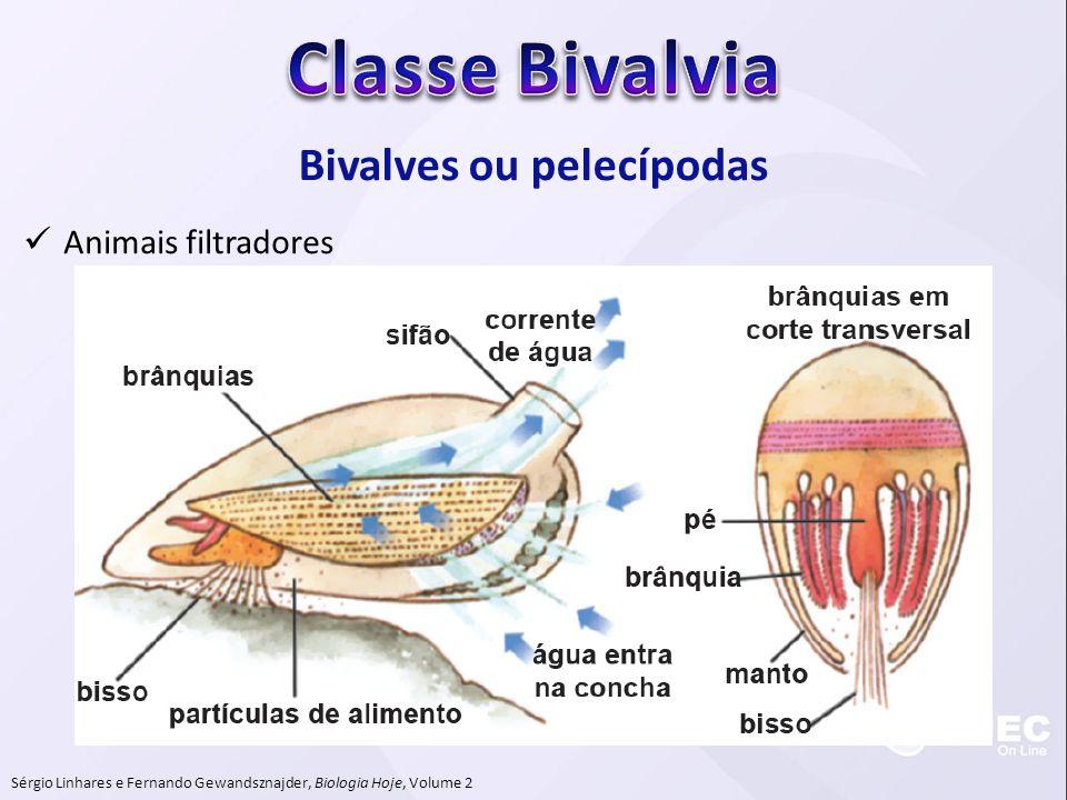 Bivalves ou pelecípodas  Animais filtradores Sérgio Linhares e Fernando Gewandsznajder, Biologia Hoje, Volume 2