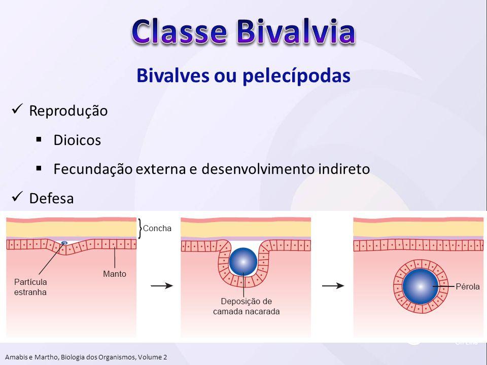 Bivalves ou pelecípodas Amabis e Martho, Biologia dos Organismos, Volume 2  Reprodução  Dioicos  Fecundação externa e desenvolvimento indireto  De