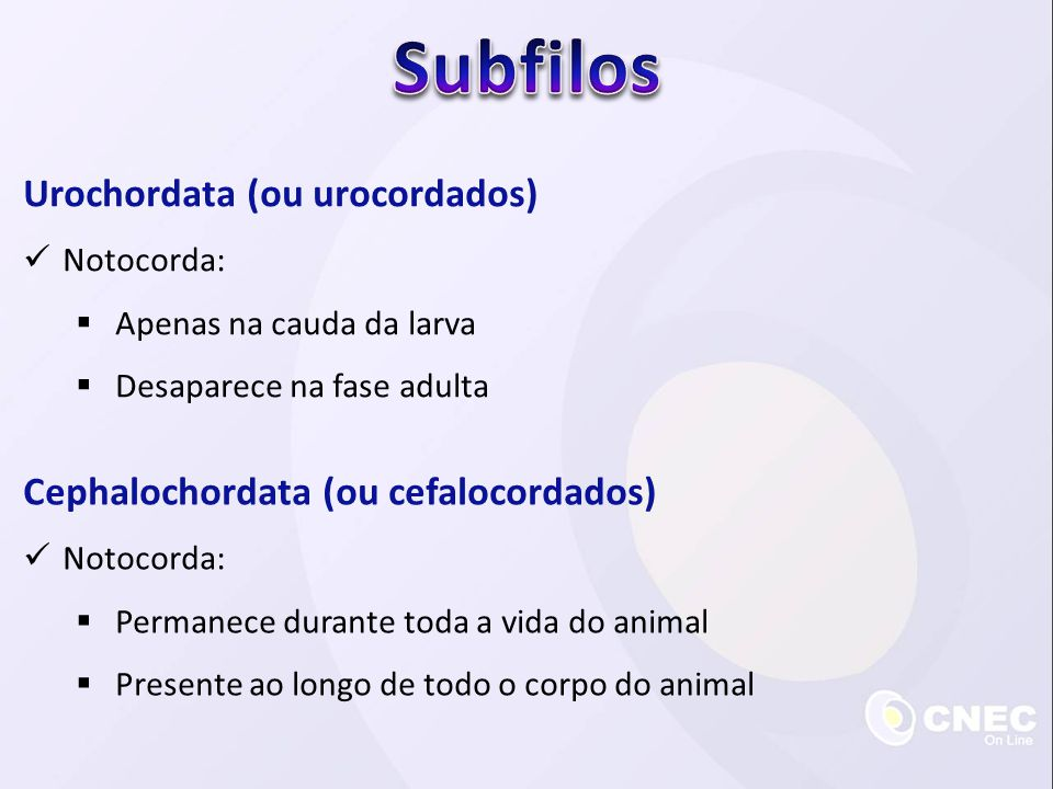 Urochordata (ou urocordados)  Notocorda:  Apenas na cauda da larva  Desaparece na fase adulta Cephalochordata (ou cefalocordados)  Notocorda:  Pe