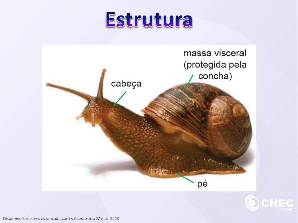  Sistema nervoso  Larva: tubo nervoso dorsal  Adulto: um único gânglio  Reprodução sexuada:  Monoicos  Fecundação cruzada  Desenvolvimento indireto  Reprodução assexuada:  Brotamento
