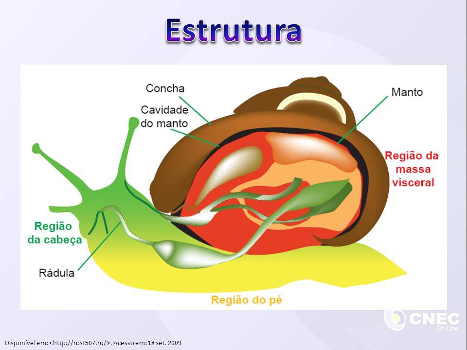 Cefalópodes  Reprodução  Dioicos  Fecundação interna  Fêmeas colocam ovos e cuidam durante o desenvolvimento  Desenvolvimento direto  Fêmeas geralmente morrem após a eclosão dos ovos