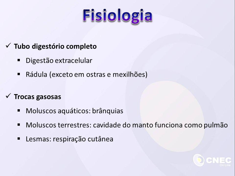  Tubo digestório completo  Digestão extracelular  Rádula (exceto em ostras e mexilhões)  Trocas gasosas  Moluscos aquáticos: brânquias  Moluscos