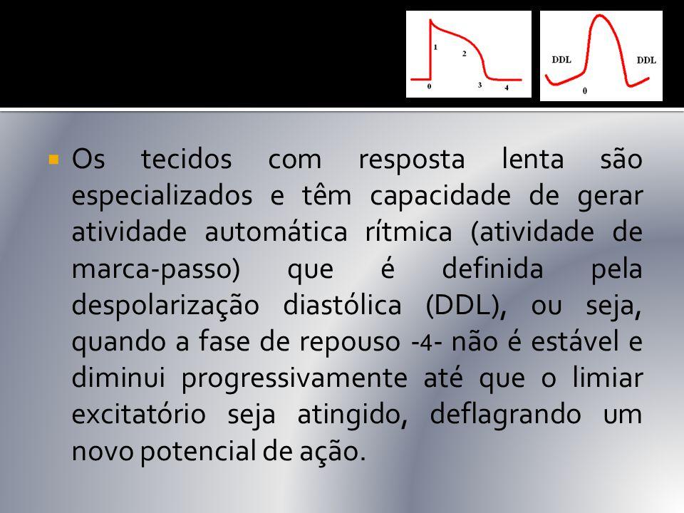  Os tecidos com resposta lenta são especializados e têm capacidade de gerar atividade automática rítmica (atividade de marca-passo) que é definida pe