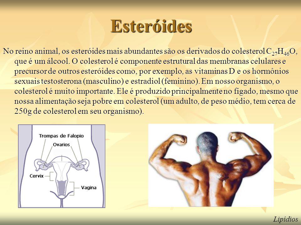 Esteróides No reino animal, os esteróides mais abundantes são os derivados do colesterol C 27 H 46 O, que é um álcool. O colesterol é componente estru