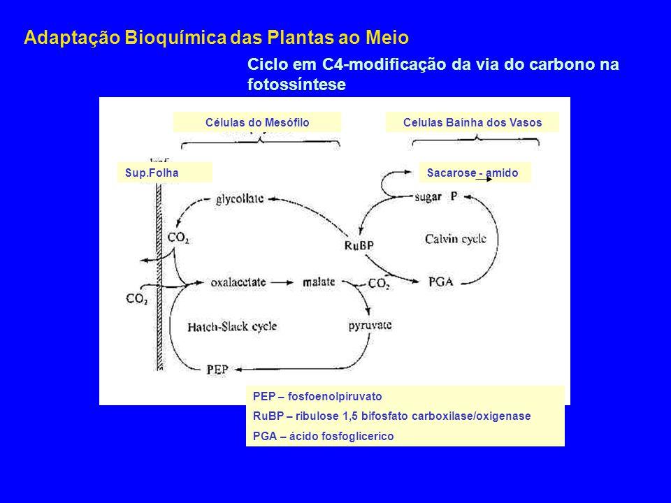 Adaptação Bioquímica das Plantas ao Meio Células do MesófiloCelulas Baínha dos Vasos Sacarose - amidoSup.Folha PEP – fosfoenolpiruvato RuBP – ribulose