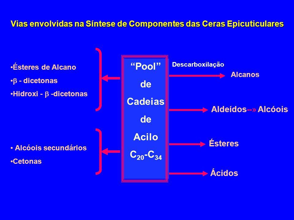 """Vias envolvidas na Síntese de Componentes das Ceras Epicuticulares """"Pool"""" de Cadeias de Acilo C 20 -C 34 •Ésteres de Alcano •  - dicetonas •Hidroxi -"""