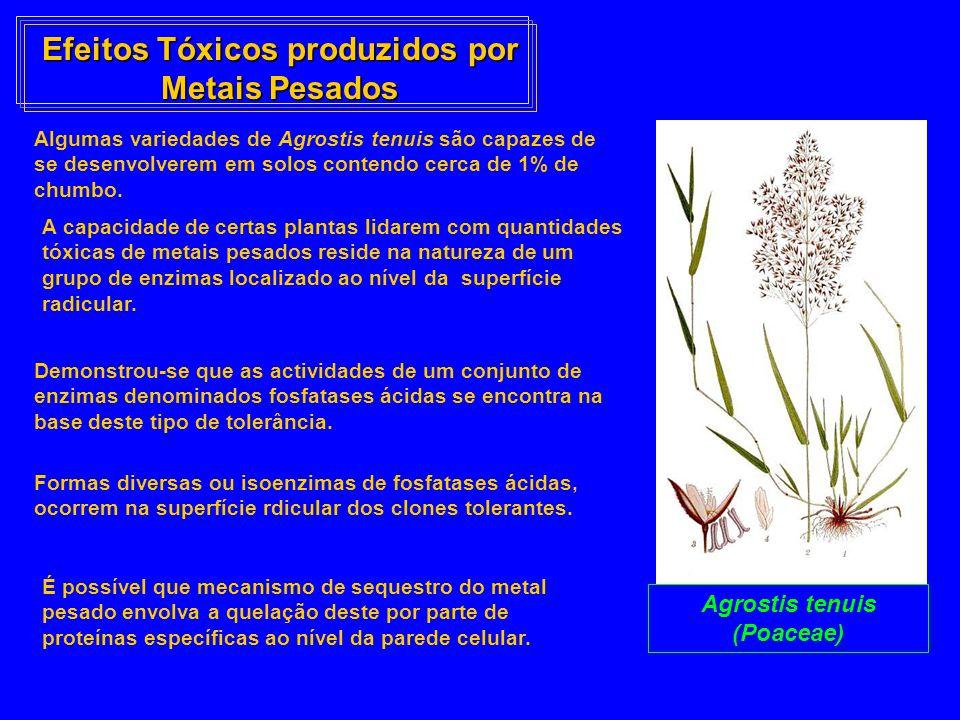 Efeitos Tóxicos produzidos por Metais Pesados Algumas variedades de Agrostis tenuis são capazes de se desenvolverem em solos contendo cerca de 1% de c