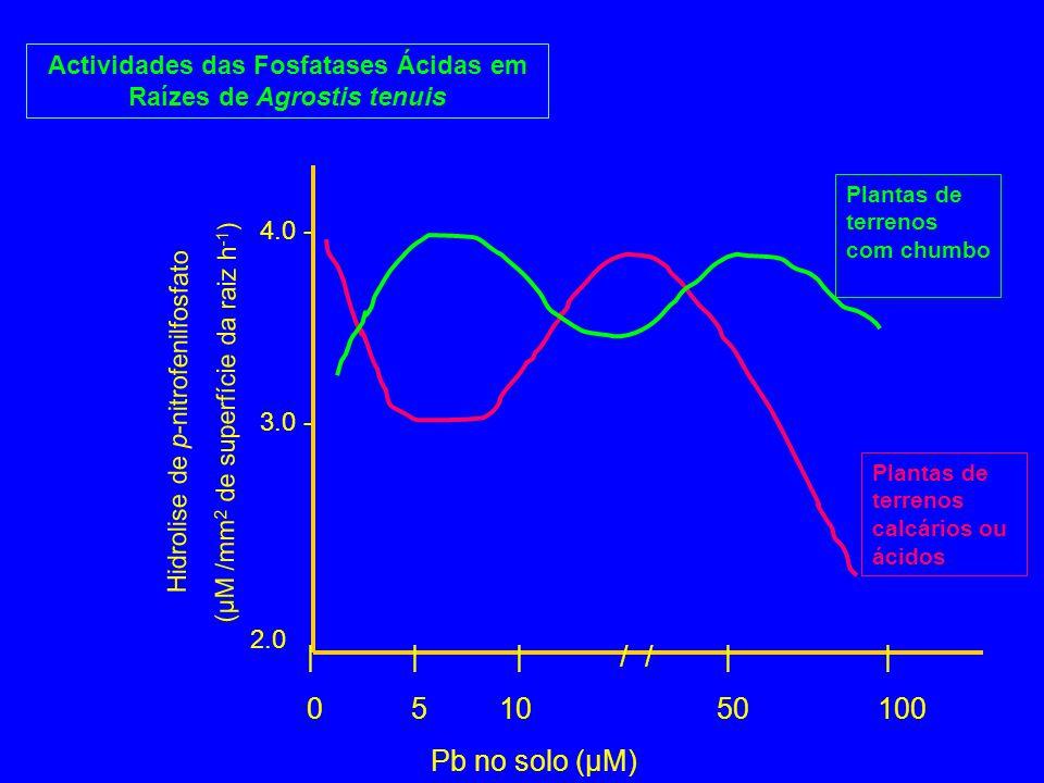 Actividades das Fosfatases Ácidas em Raízes de Agrostis tenuis ||| / /| | 05 10 50 100 Pb no solo (µM) Hidrolise de p-nitrofenilfosfato (µM /mm 2 de s