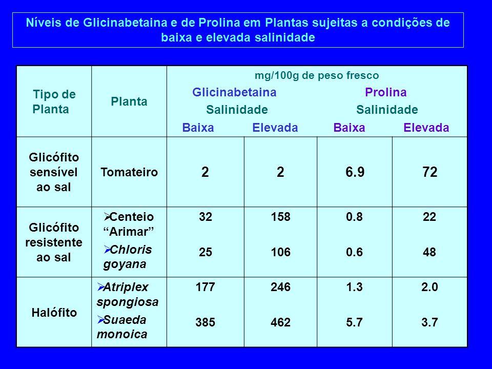 Níveis de Glicinabetaina e de Prolina em Plantas sujeitas a condições de baixa e elevada salinidade Tipo de Planta Planta mg/100g de peso fresco Glici
