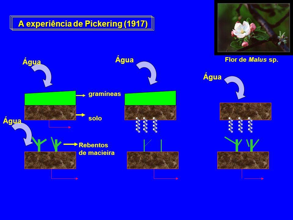 A experiência de Pickering (1917) Flor de Malus sp. gramíneas solo Rebentos de macieira Água
