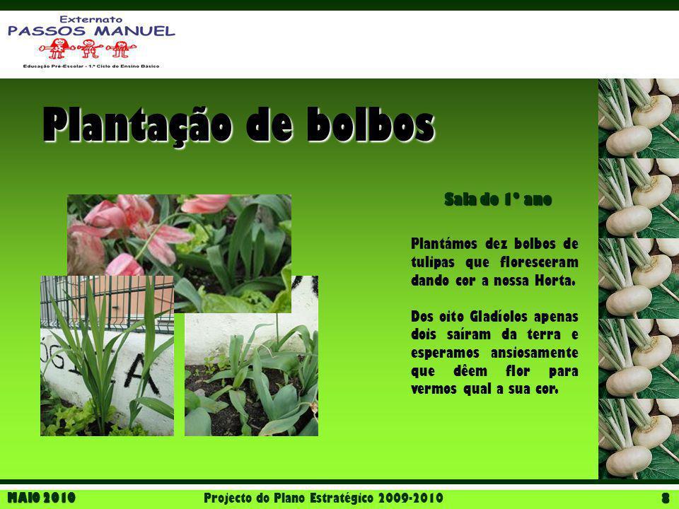 MAIO 2010 Projecto do Plano Estratégico 2009-2010 8 Plantação de bolbos Sala do 1º ano Plantámos dez bolbos de tulipas que floresceram dando cor a nos