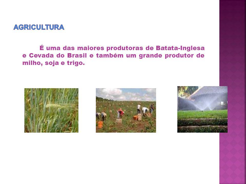 É uma das maiores produtoras de Batata-Inglesa e Cevada do Brasil e também um grande produtor de milho, soja e trigo.