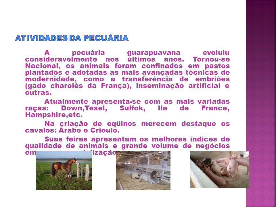 A pecuária guarapuavana evoluiu consideravelmente nos últimos anos.