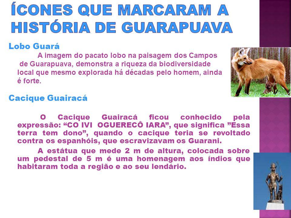 Lobo Guará A imagem do pacato lobo na paisagem dos Campos de Guarapuava, demonstra a riqueza da biodiversidade local que mesmo explorada há décadas pelo homem, ainda é forte.