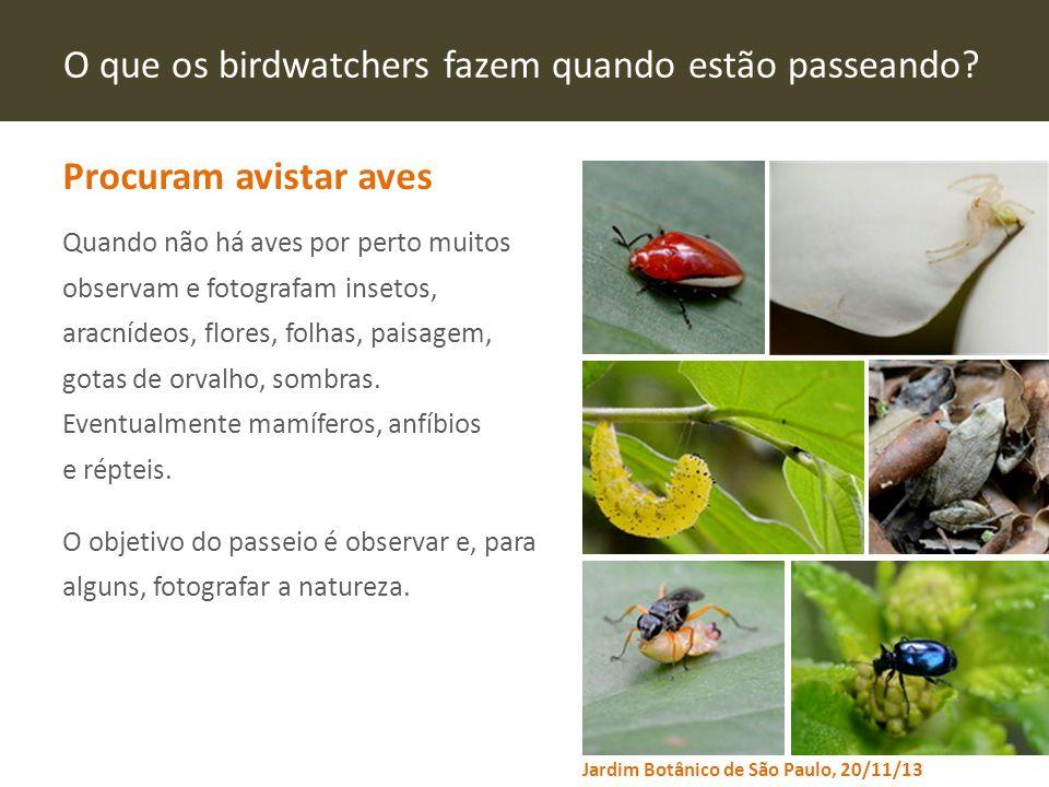 www.virtude-ag.com Fontes: Perfil do turista de aventura e do ecoturista no Brasil / Ministério do Turismo;Ilustrações de Eduardo Caçador Pontes.
