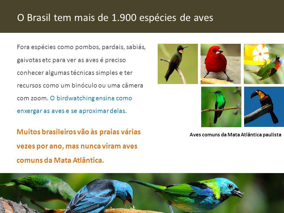 Fora espécies como pombos, pardais, sabiás, gaivotas etc para ver as aves é preciso conhecer algumas técnicas simples e ter recursos como um binóculo