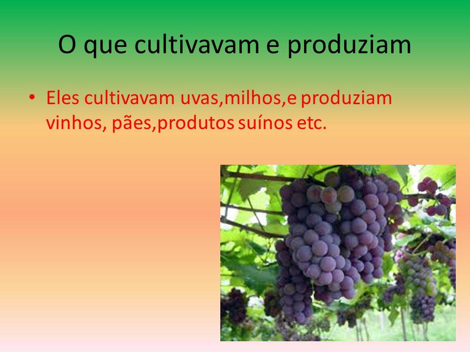 O que cultivavam e produziam • Eles cultivavam uvas,milhos,e produziam vinhos, pães,produtos suínos etc.