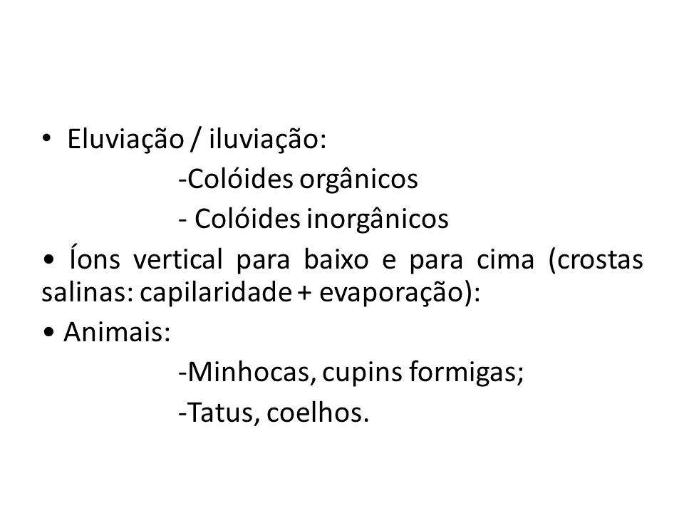 • Eluviação / iluviação: -Colóides orgânicos - Colóides inorgânicos • Íons vertical para baixo e para cima (crostas salinas: capilaridade + evaporação): • Animais: -Minhocas, cupins formigas; -Tatus, coelhos.