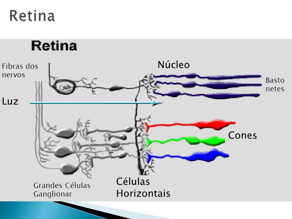 Luz Fibras dos nervos Células Horizontais Cones Basto netes Núcleo Grandes Células Ganglionar