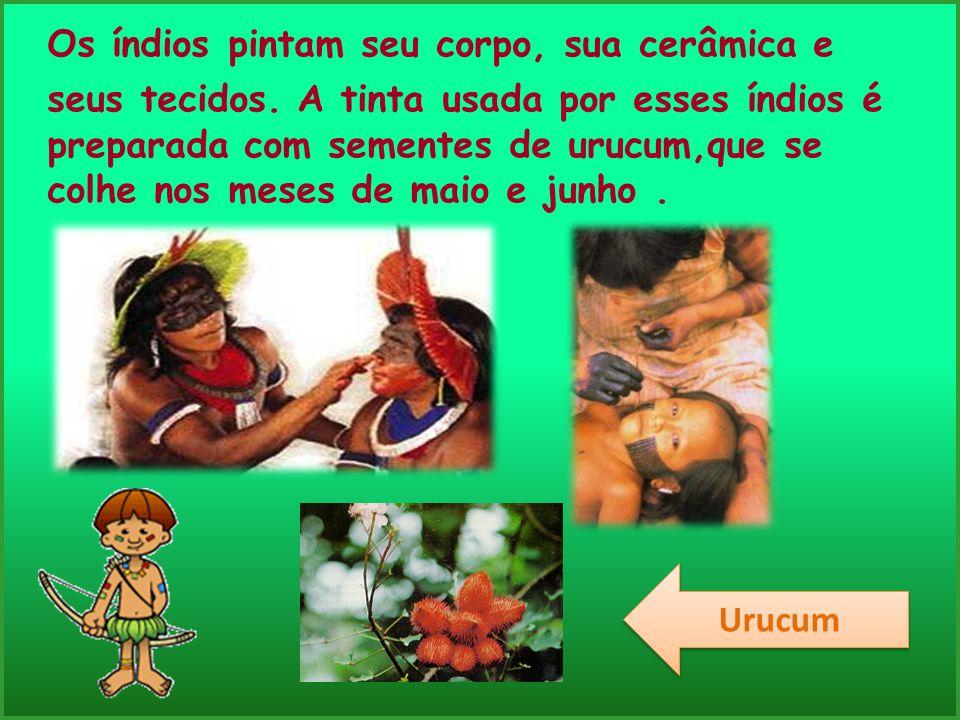 Os índios pintam seu corpo, sua cerâmica e seus tecidos. A tinta usada por esses índios é preparada com sementes de urucum,que se colhe nos meses de m