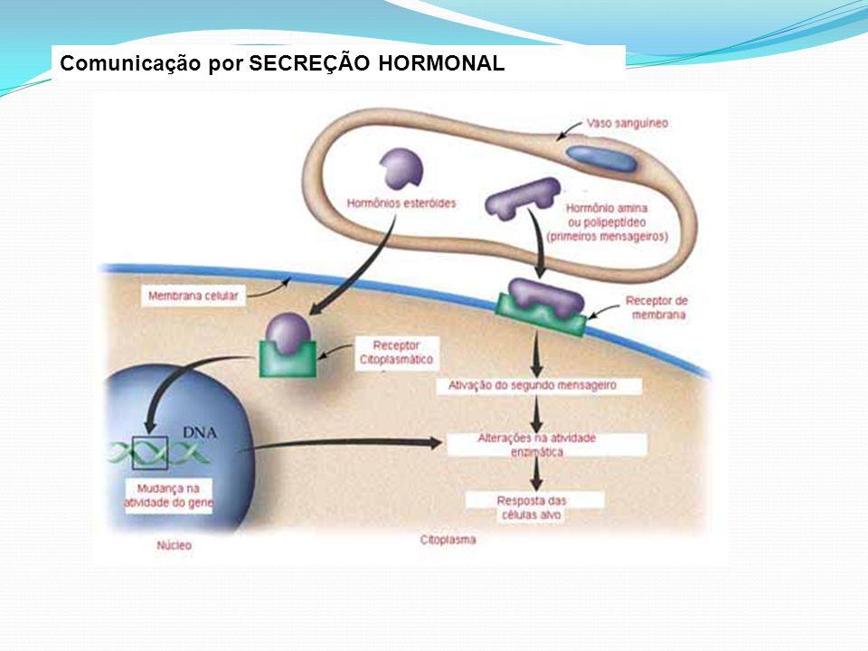 Comunicação por SECREÇÃO HORMONAL